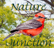 NatureJunction, discount binoculars